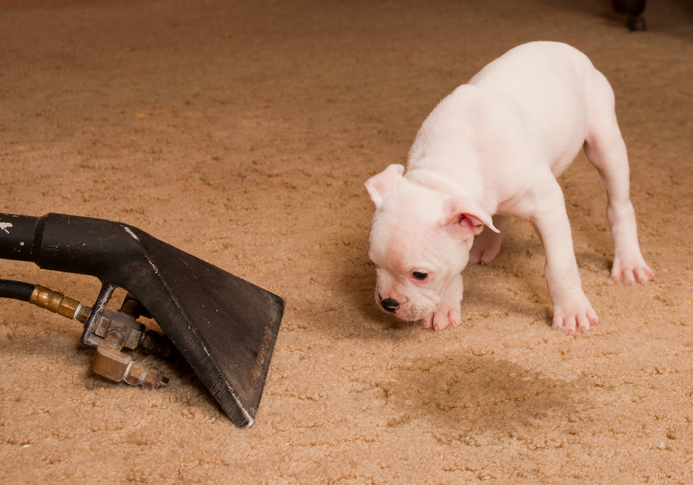 How To Get Rid Of Dog Urine Smell In House From Carpet In Yard On