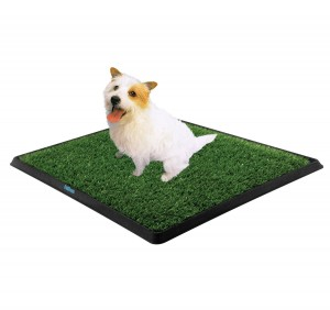 How To Get Your Dog To Use A Pee Pad