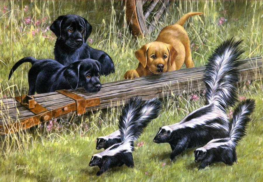 Dogs and skunks