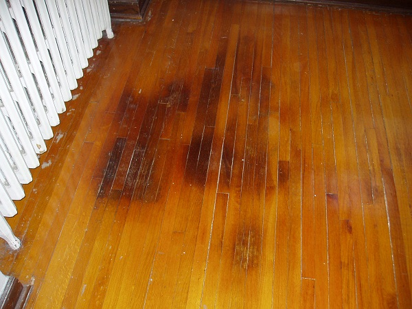 Cat pee cleaning hardwood floors