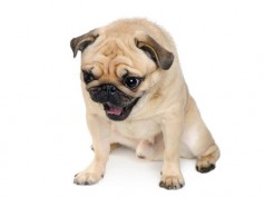 What To Give A Dog Throwing Up Bile