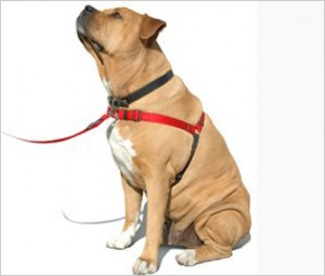 Front Clip Dog Harness Pets At Home