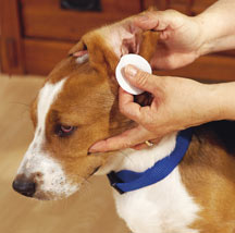 Best Way To Get Dog Ears Clean