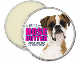 dog nose dry and cracked