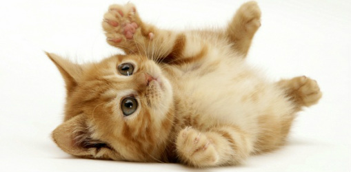 Pros And Cons Of Cats declawing cats how to, when, pros and cons, alternatives, cost
