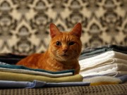 Lothes with cat urine smell cause repeat accidents