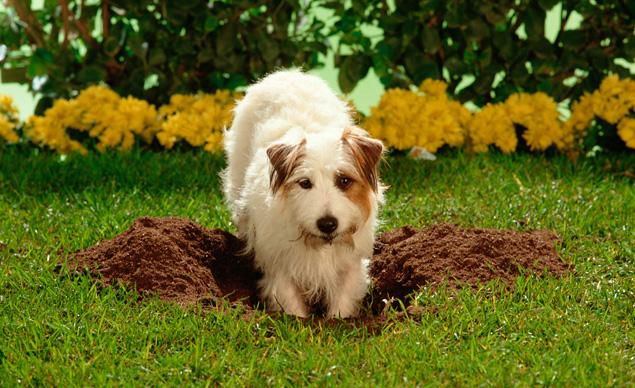 How To Stop Dog Digging Holes In The Yard Under Fence