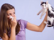 How to get rid of cat dander for allergy sufferers