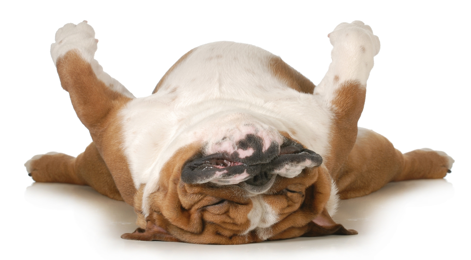 Can Tooth Abscess In Dogs Cause Breathing Problems