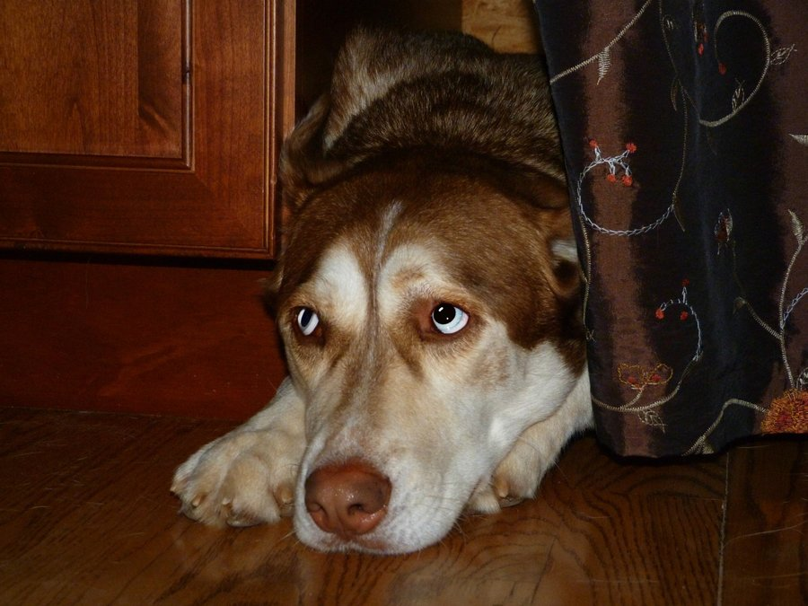Dog Hiding Under Bed In Corners In Closet And Why Do Dogs Bury
