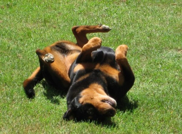Epilepsy in Dogs, Causes, Types, Symptoms, Diagnosis ...