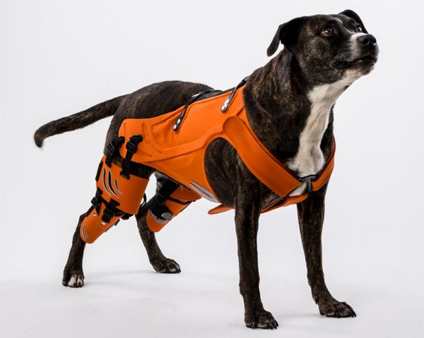 Harness for Dogs with Hip Dysplasia