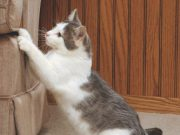How to stop cat from scratching furniture