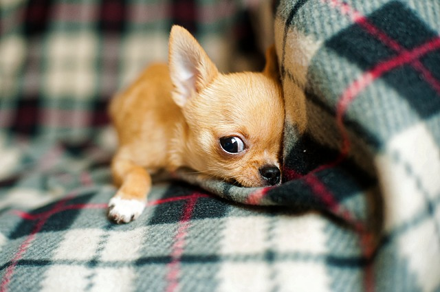 Puppy Crying At Night In Crate Causes And How To Stop Your Puppy
