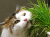 Plants that are Poisonous to Cats.