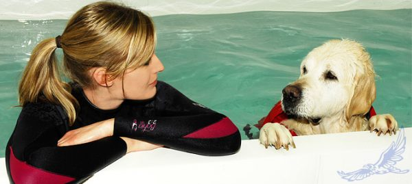 how to become a dog hydrotherapist