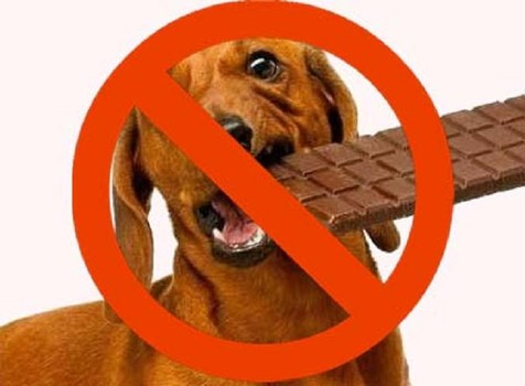 Home Treatment For Dogs Eating Chocolate