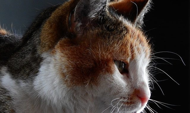 7 Reasons Why Your Cat Is Drooling Excessively Sick Or