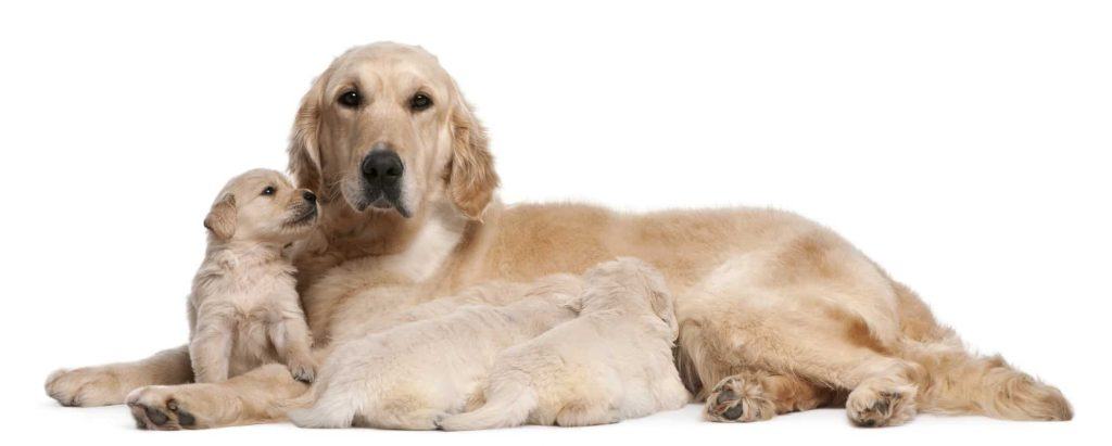 More Dog behaviors after giving birth