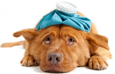 Dog Sore Throat