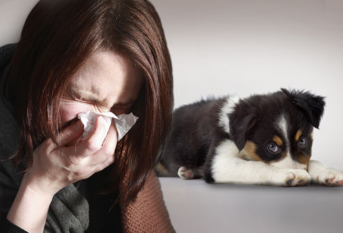 Allergy To Dogs Symptoms Home Relief And Dogs For