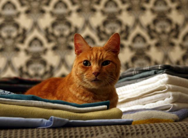 How To Get Rid Of Cat Urine Smell On Carpet In House