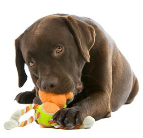 Dog toys to alleviate boredom