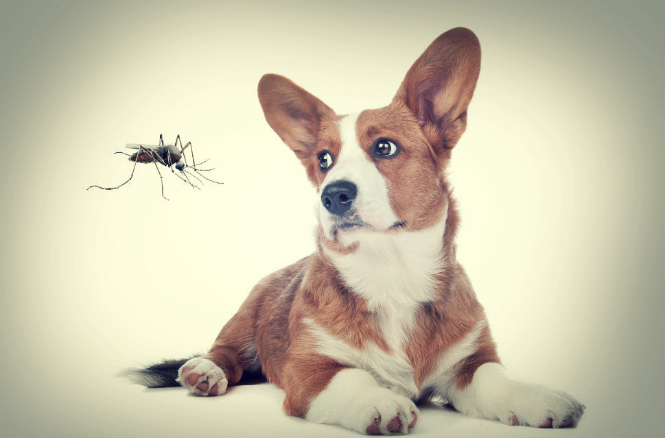 mosquito repellent for dogs