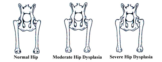 Classification of Hip Dysplasia in Dogs