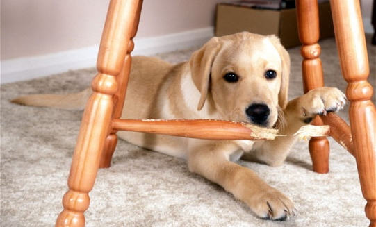 How to stop dog from chewing