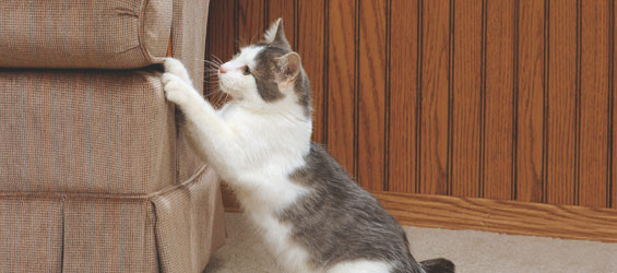 How To Stop A Cat From Scratching Furniture Dogs Cats Pets