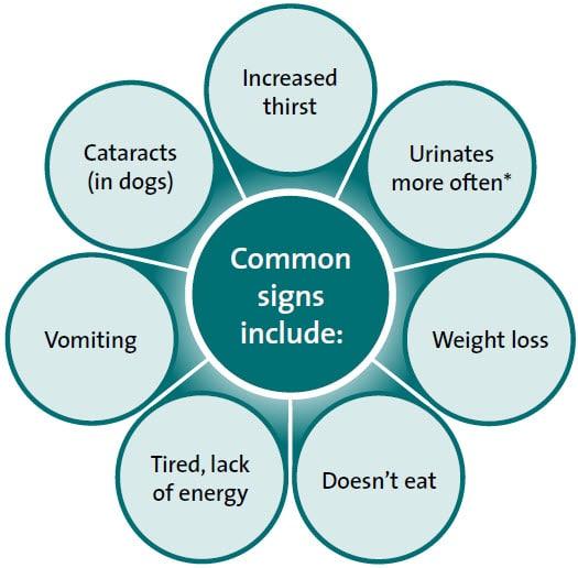 Diabetes beim Hund