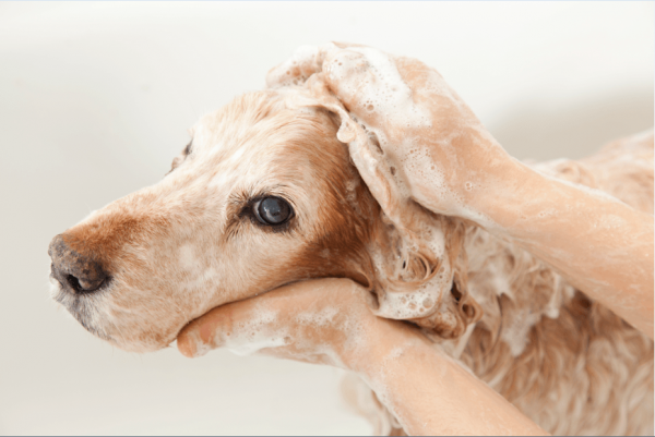 Shampoos for Dogs.