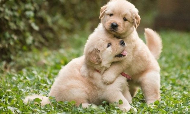 ins and outs of puppy care