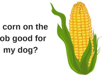 Is corn on the cob good for my dog.