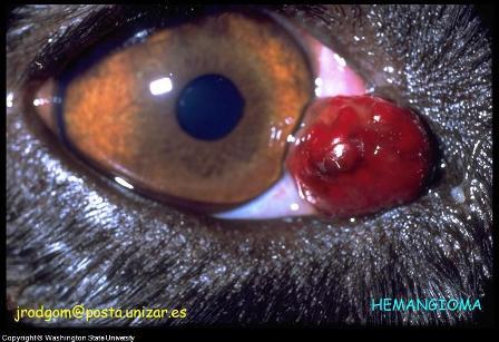 Tumors on dog's eyelid.